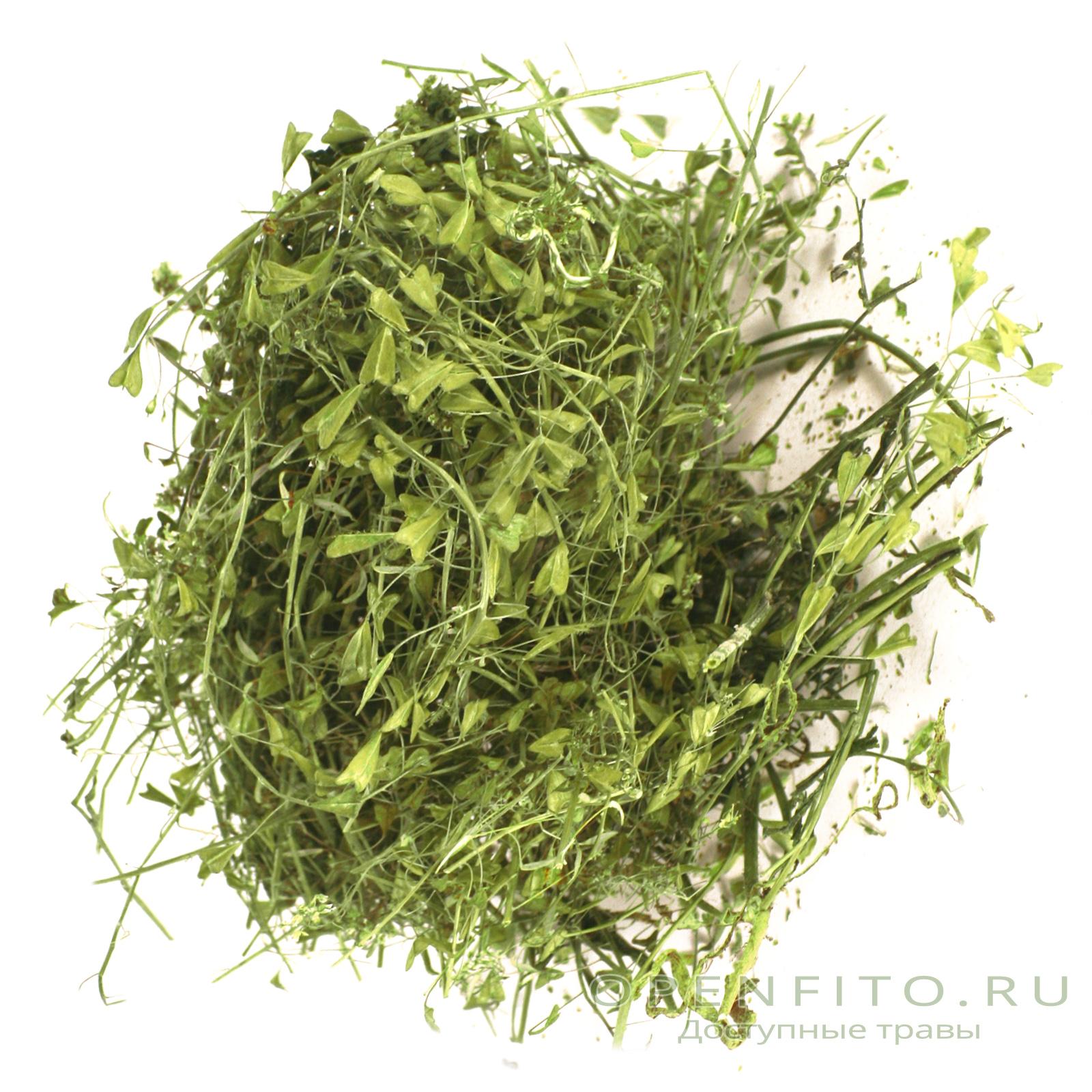 f3c9e4c76812 Купить траву пастушья сумка