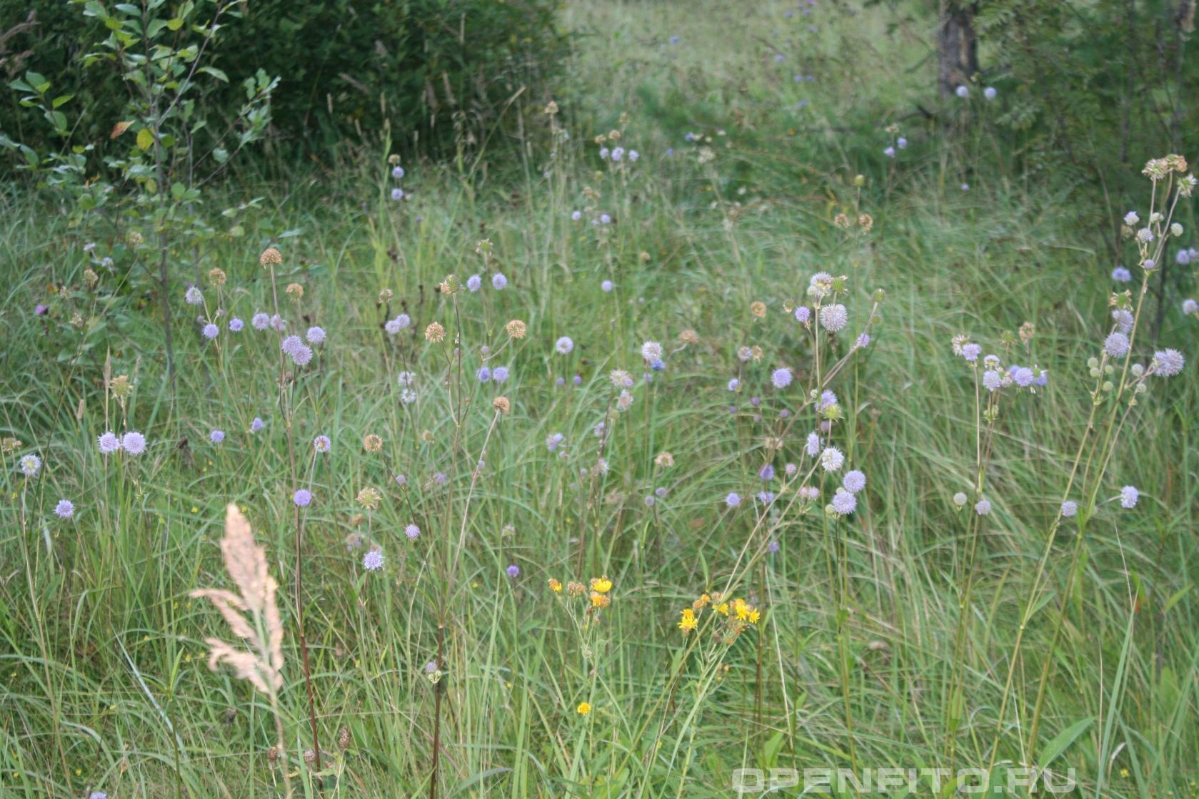 Сивец Осеннее поле