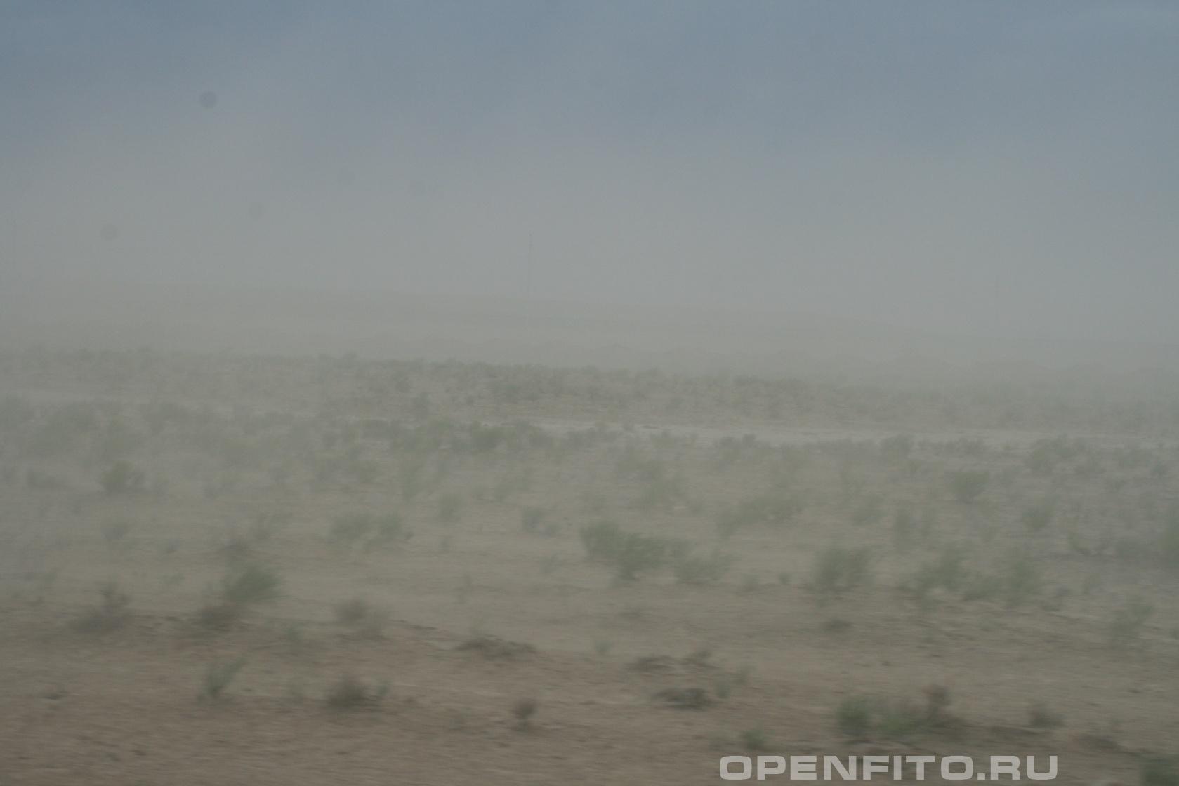 Степь <p>Песчаная буря? Республика Калмыкия</p>