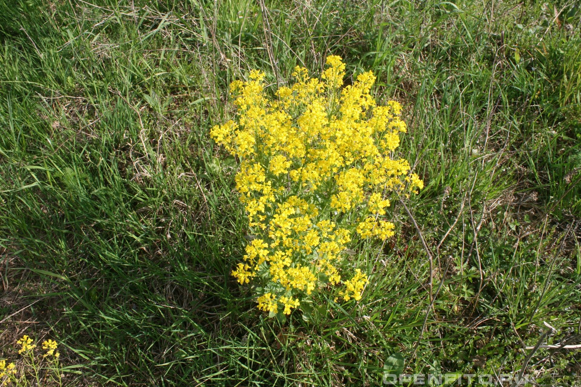 Энциклопедия желтых цветов и названия