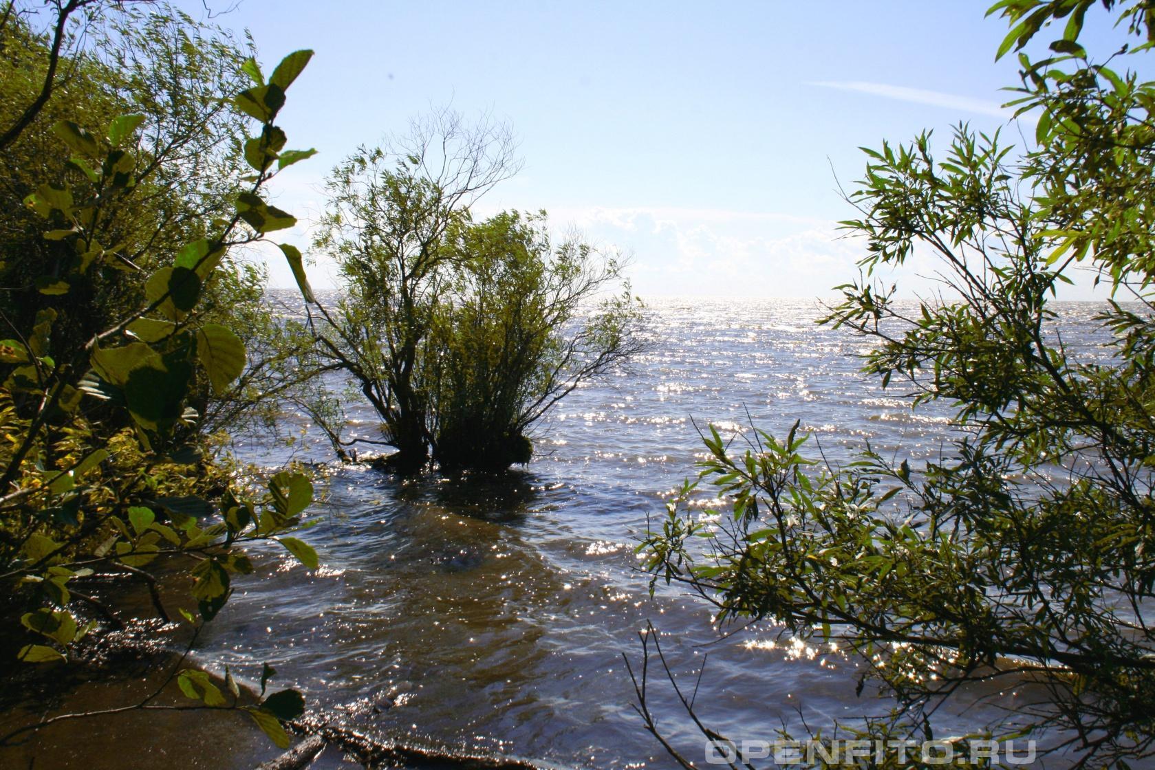 Белое озеро Волгоградская область