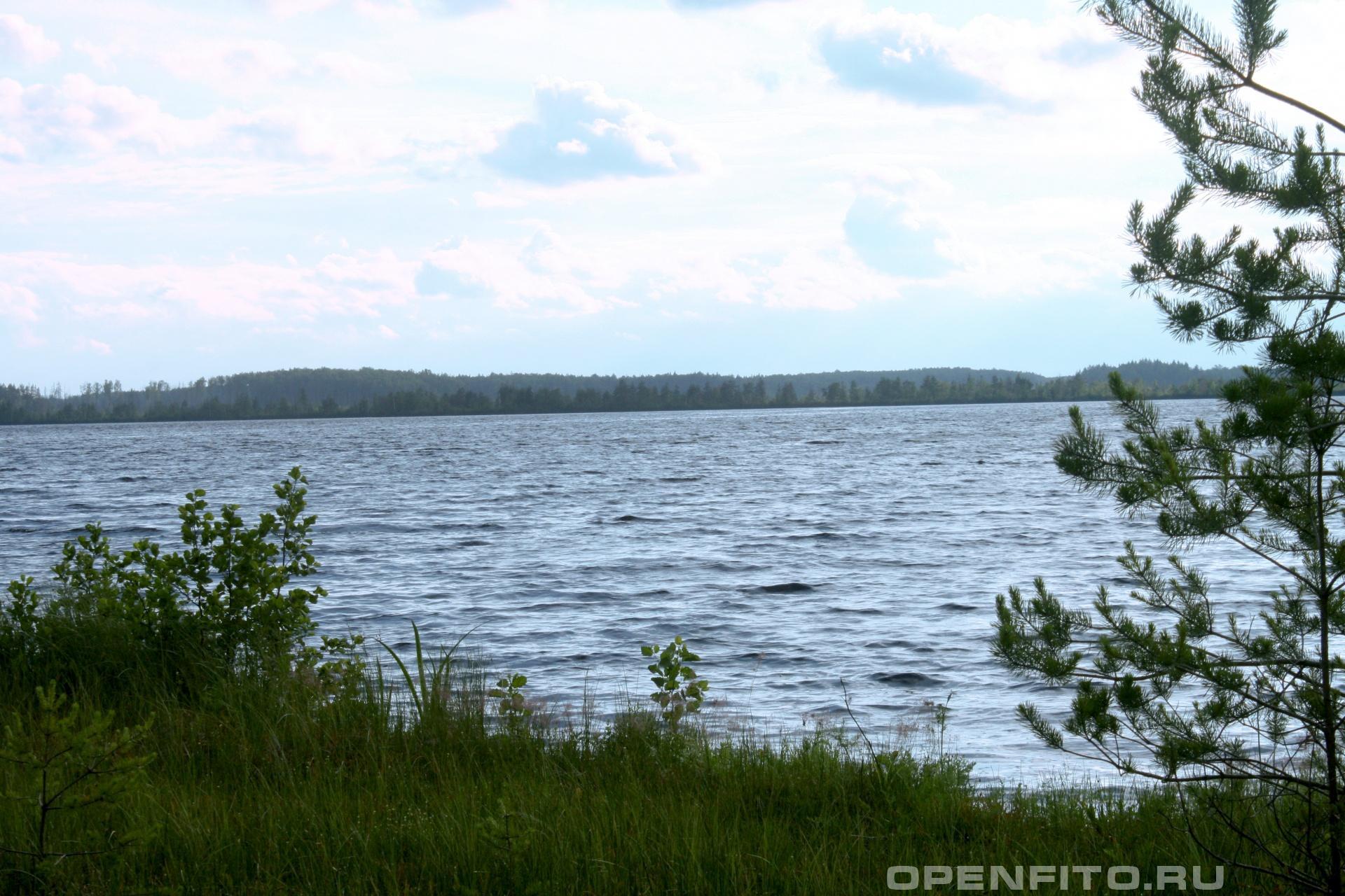 Озеро Богоявленское Южский район Ивановской области