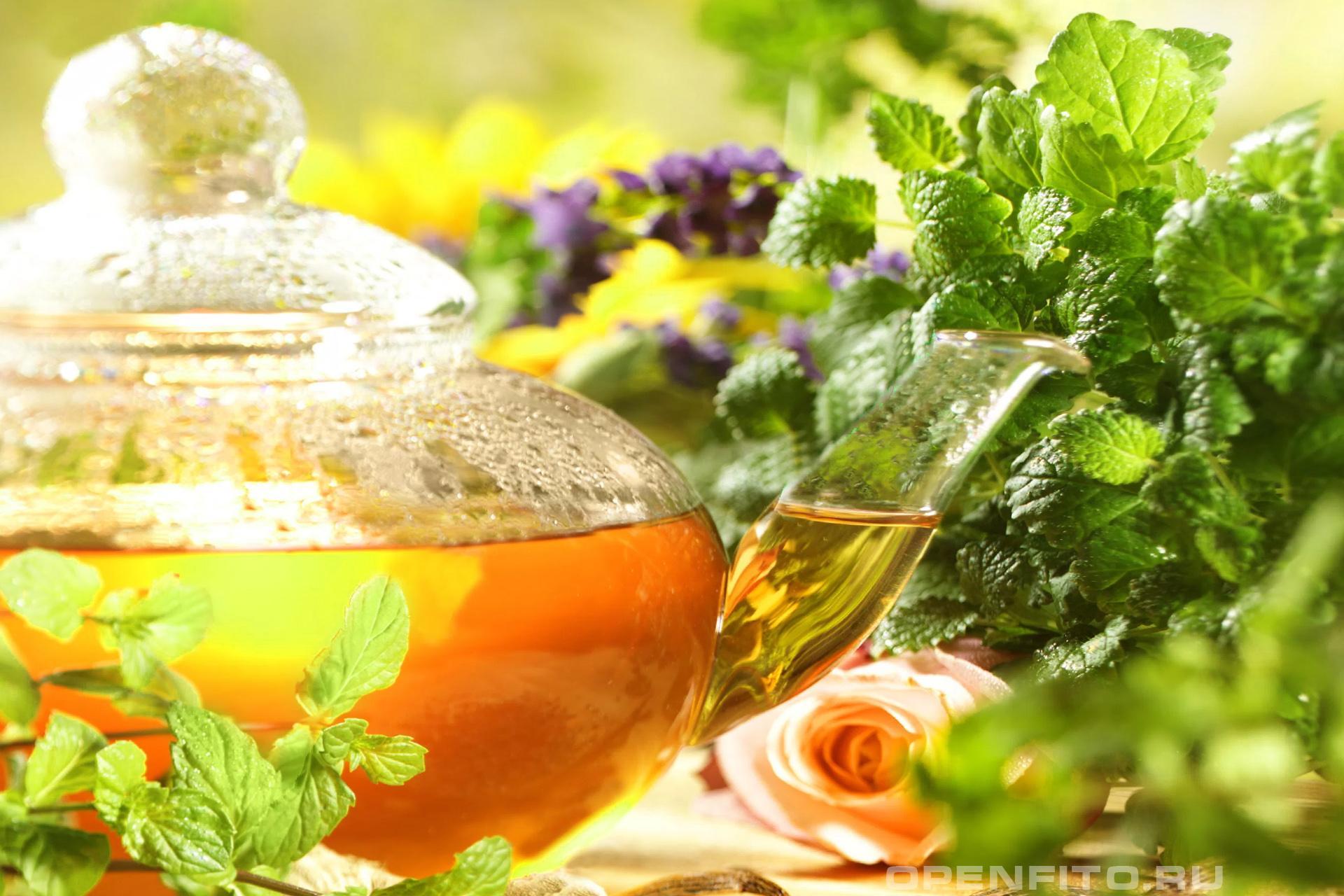 Чайник с мелиссой фиточай с лепестками роз и мелиссой