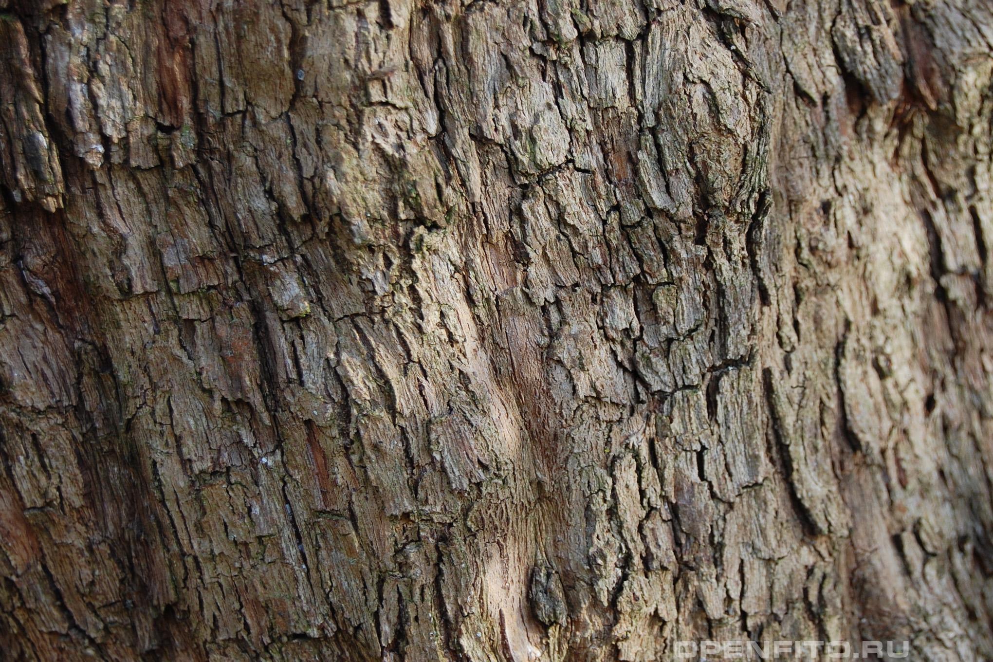 Кизил лекарственный кора дерева