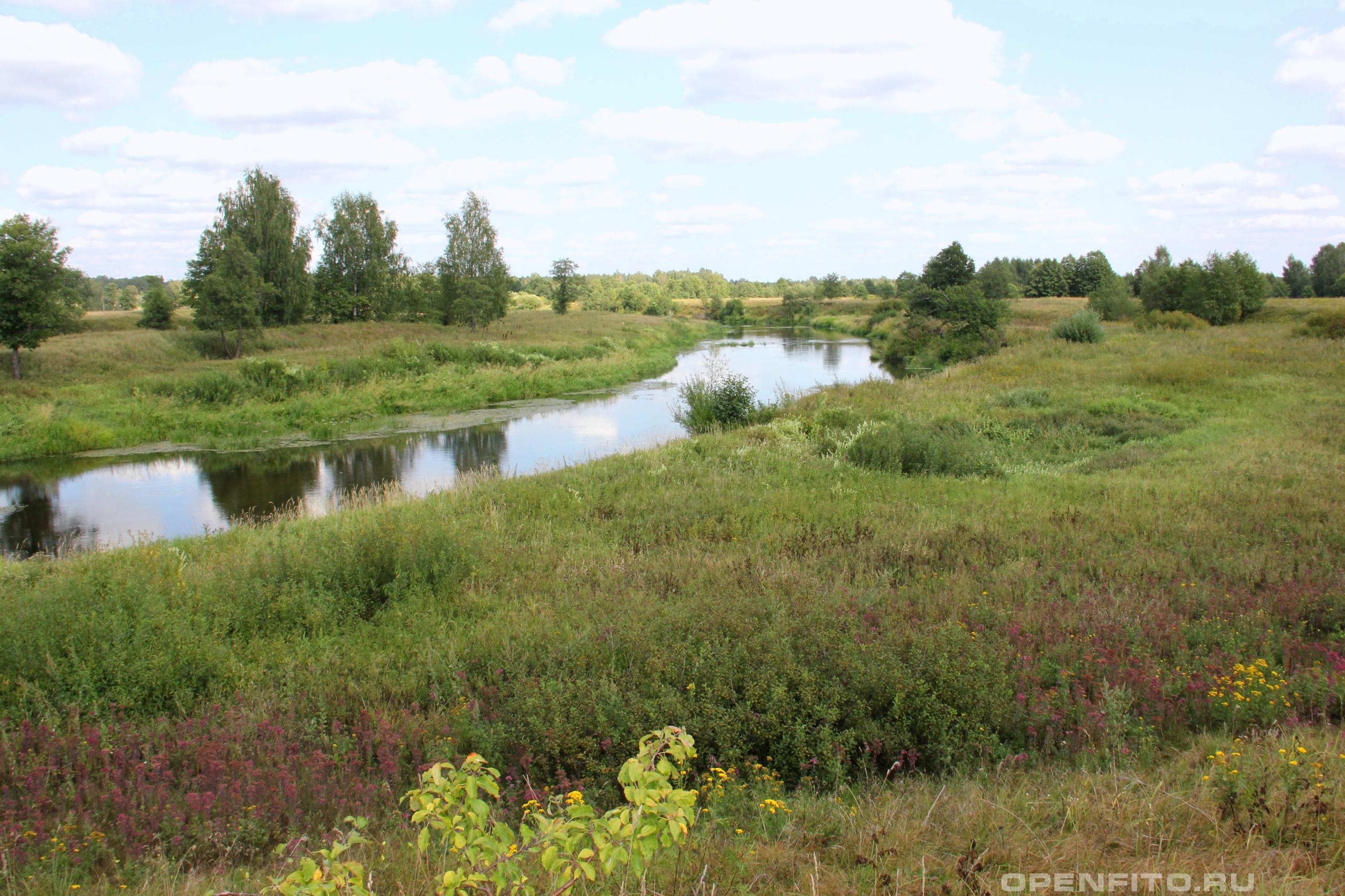 Река Теза Шуйский район