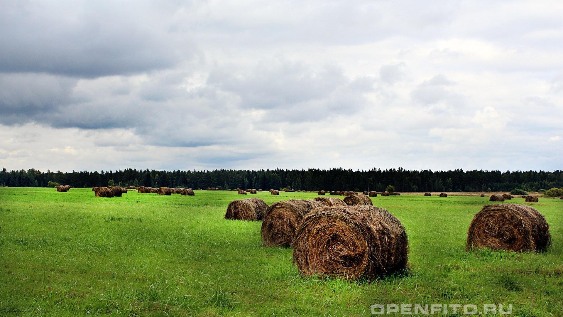 Сено Юрьевецкий район Ивановской области