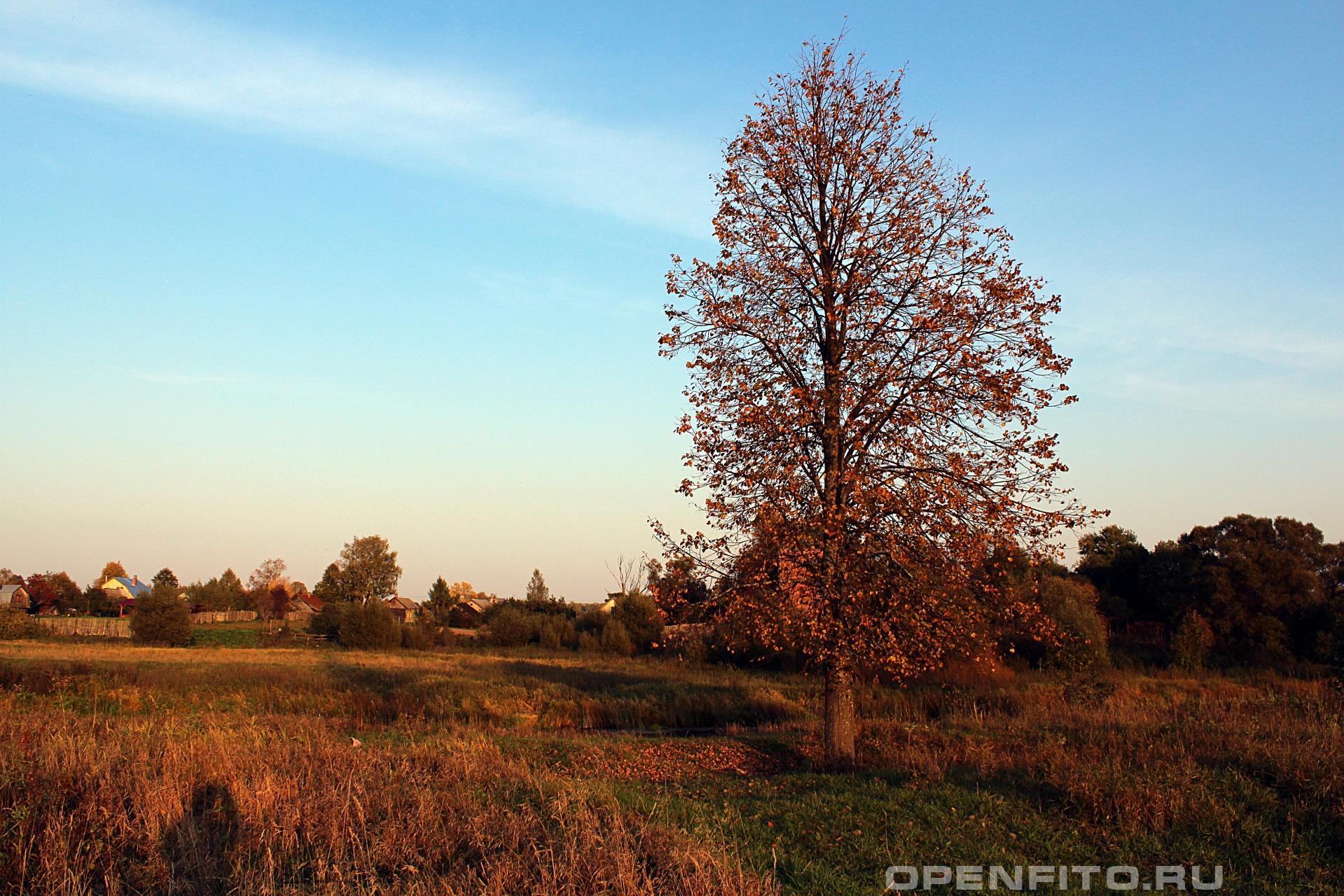 Дерево <p>село Горицы, Шуйский район Ивановской области</p>