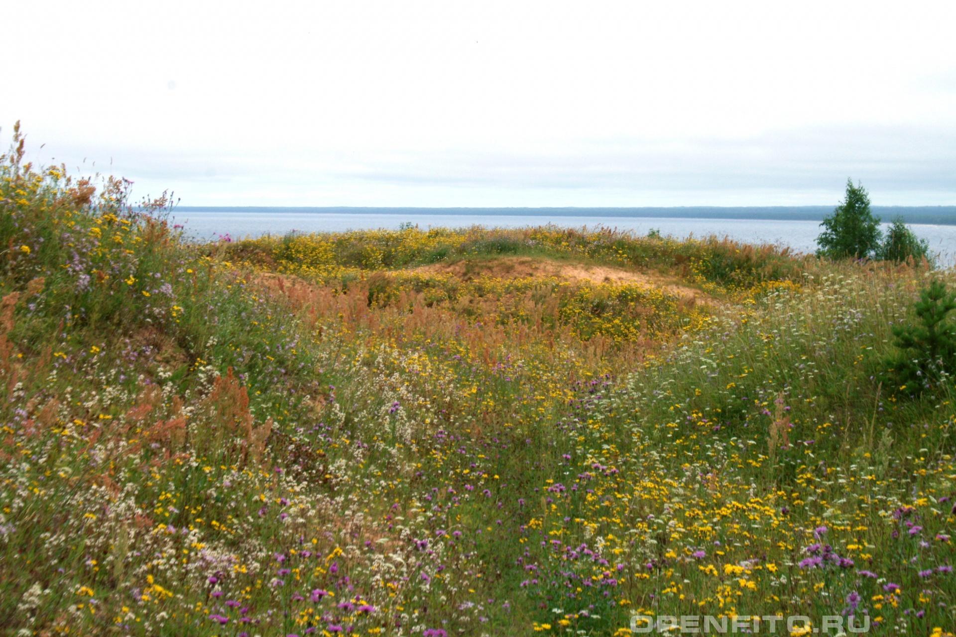 Северное поле Республика Карелия в августе