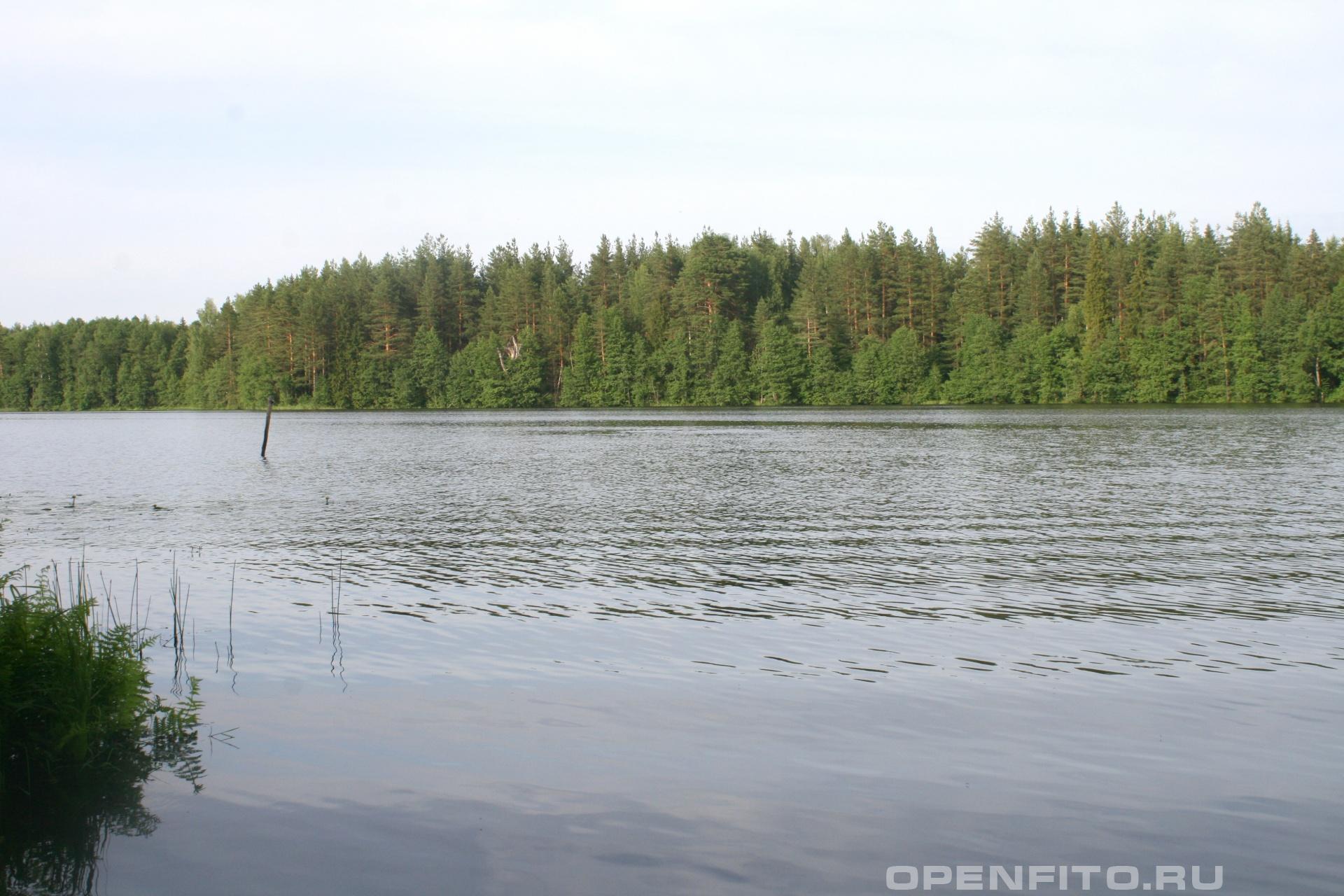 Озеро Заборье Южский район Ивановской области