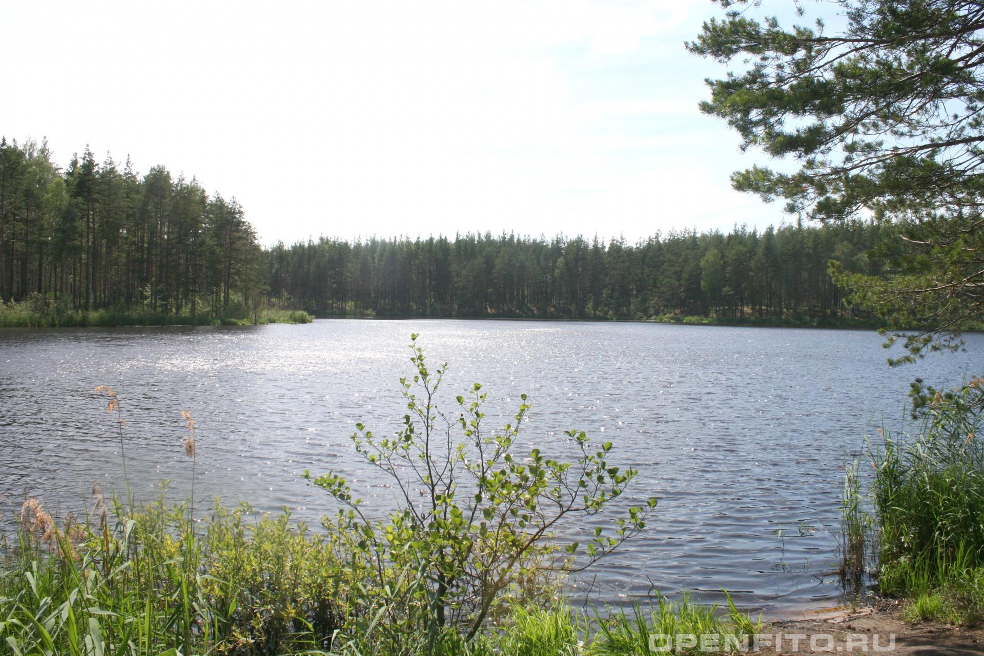 Озеро Тоньки Южский район Ивановской области