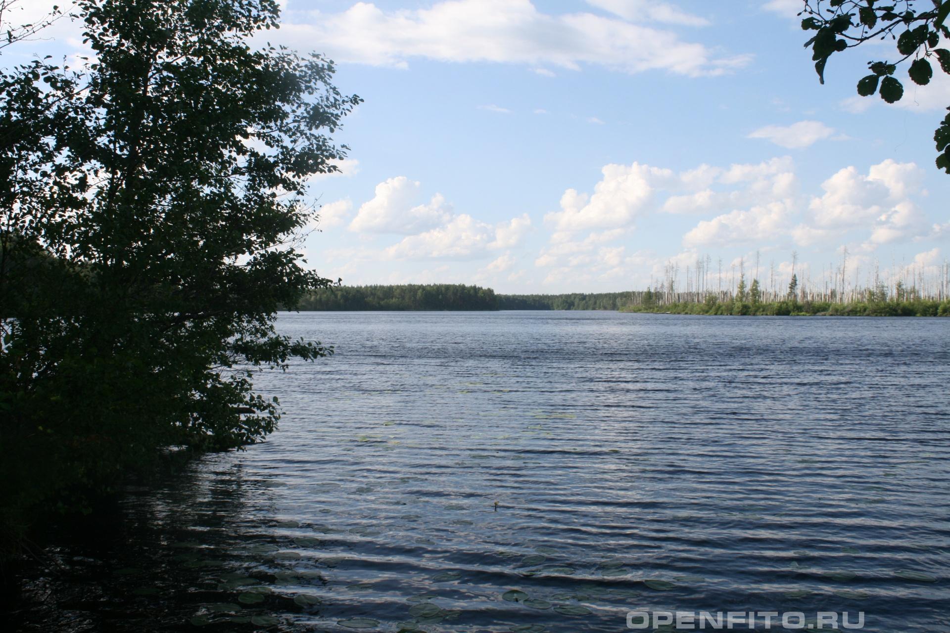 Озеро Поныхарь Южский район