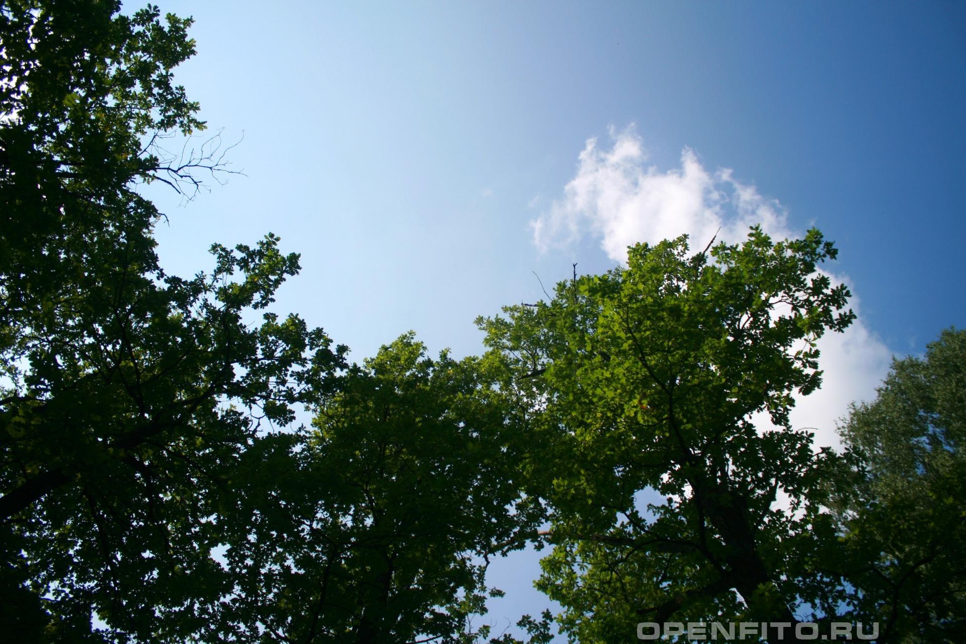 Дубовая роща Южский район Ивановской области