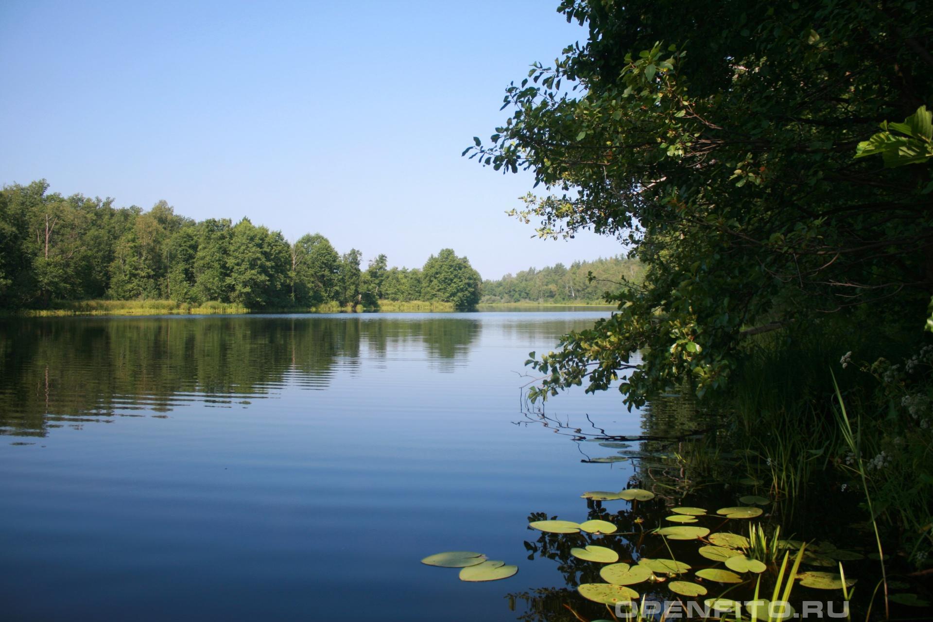 Озеро Ореховое Южский район Ивановская область