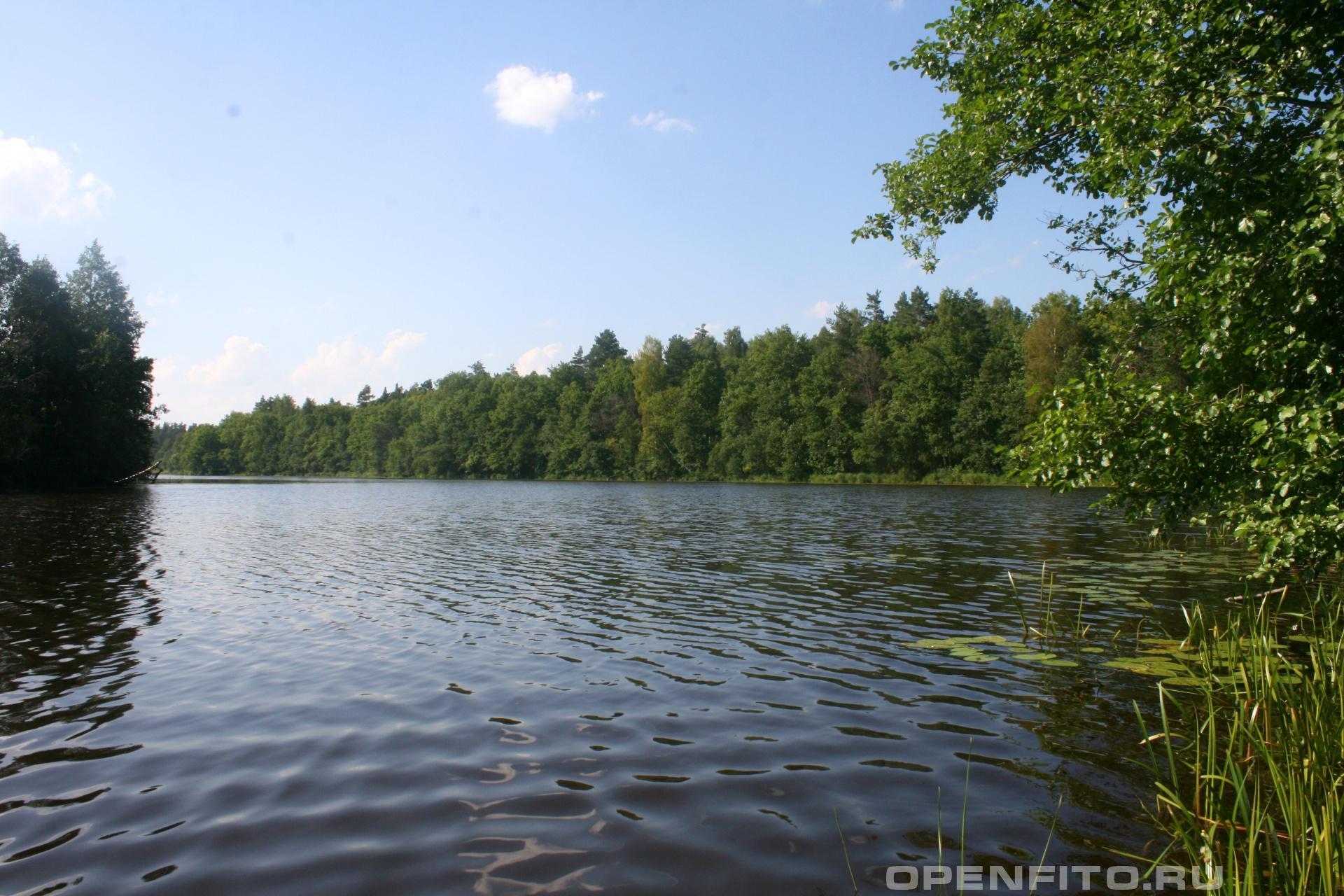 Озеро долгое Южский район Ивановской области