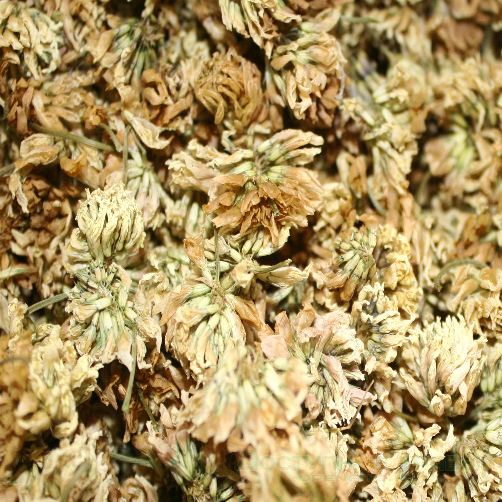 цветки клевера белого