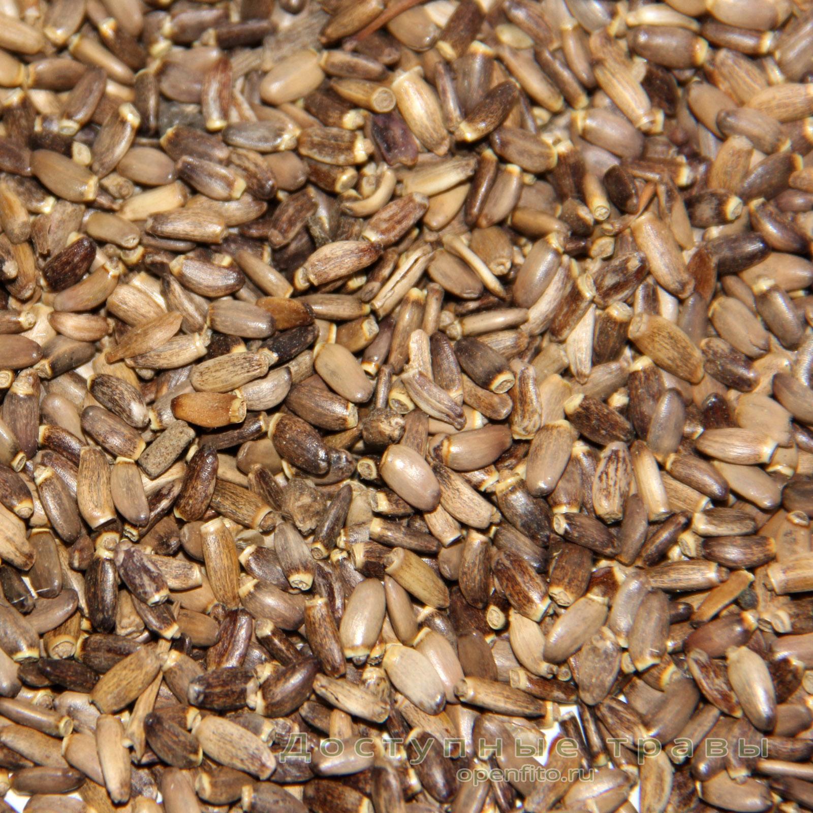 семена расторопши состав
