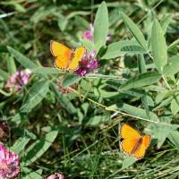 Лесные бабочки