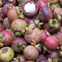 Гарциния мангостан